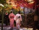 Ngây ngất sắc đỏ mùa thu Nhật Bản