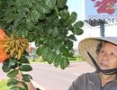 Phát hoảng 1.600 cây độc, động vào ngứa khắp người trên quốc lộ 14