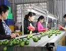 Trái cây đặc sản Việt vào Mỹ, Nhật