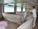 Bí quyết làm giàu của tỷ phú trang trại đa canh