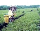 Bộ Công an vào cuộc vụ doanh nhân Hà Linh chết bất thường