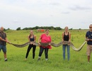 Tóm gọn con trăn khổng lồ dài gần 6m