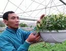 Choáng với hạt giống cây cảnh lạ giá 250.000 đồng