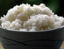 Ăn cơm nguội hâm nóng có thể gây ngộ độc