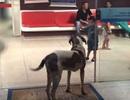 Chó trung thành bịn rịn bệnh viện nơi chủ nhân đang điều trị