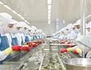 Thủy sản Minh Phú Hậu Giang - Vươn tầm phát triển cùng cải tiến công nghệ