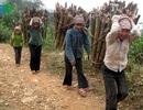 Xuất khẩu lao động: Dân Tây Bắc vỡ mộng thoát nghèo
