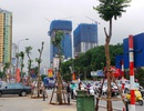 Hà Nội thay thế toàn bộ cây gỗ mỡ trên đường Nguyễn Chí Thanh