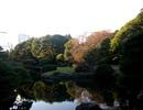 Tham quan vườn quốc gia Shinjuku Gyoen tuyệt đẹp ở Tokyo