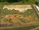 Tái hiện tranh Van Gogh trên cả một cánh đồng