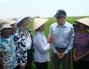 Quan chức Mỹ ra đồng trò chuyện cùng nông dân Nam Định