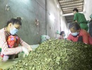 Phát hiện gần 3 tấn nguyên liệu trà không rõ nguồn gốc