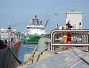 Việt Nam và các nước ADMM+ bắt đầu các hoạt động diễn tập tại cảng Muara, Brunei