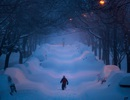 Bão tuyết gây tê liệt nước Mỹ như thế nào?