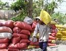 Gạo Việt Nam mang thương hiệu… Trung Quốc