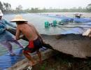 Bão suy yếu thành áp thấp nhiệt đới, nhiều nơi vẫn mưa lớn, gió mạnh