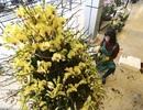 Hoa lan nhập ngoại đón Tết giá trăm triệu vẫn đắt khách