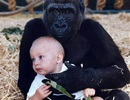 Những câu chuyện kỳ lạ về loài khỉ