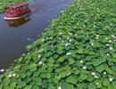 Lạc giữa hồ hoa sen đẹp mê hồn ở Trung Quốc