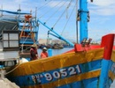 Cảng cá lớn nhất miền Trung: Giá cá rớt thê thảm sau vụ Formosa