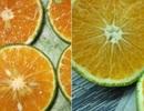 Phân biệt cam Việt Nam với cam Trung Quốc bằng cách cực đơn giản