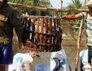 Kiểu thu mua cá, tôm lạ đời của thương lái Trung Quốc