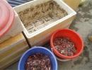 Lạ Hà Nội: Tích rác, ủ phân trong nhà để được ăn sạch