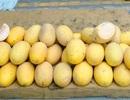 11.000 tấn dưa vàng Trung Quốc: Dân Việt tráng miệng hết veo