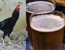 Ăn bẩn chơi sang: Nhậu bia độc thịt ôi, chơi vẹt ngàn đô