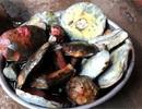 Thần dược giải nhiệt: 800 ngàn đồng/kg, Hà Thành tranh nhau ăn