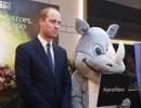 Hoàng tử William: Động vật hoang dã sẽ tuyệt chủng vì chính chúng ta