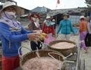 Mùa ruốc muộn mang tiền tỷ cho ngư dân Quảng Ngãi