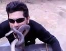 Chàng trai táo bạo nhét rắn vào mồm
