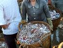 Phú Yên: Cuộc mưu sinh của những nữ 'cửu vạn' ở chợ cá Xuân Cảnh