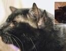 Mèo bốn tai hiếm thấy tìm được nhà mới