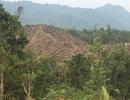 Khởi tố hay xử phạt vụ gia đình chủ tịch thị trấn phá bay hàng chục nghìn m2 rừng?