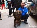 Hà Nội: Bắn thuốc mê bắt khỉ mặt đỏ náo loạn khu dân cư