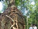 Kỳ bí cây bồ đề khoảng 200 tuổi mọc trên đỉnh tháp