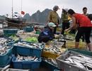 Vì sao chưa thể khẳng định hải sản miền Trung an toàn?