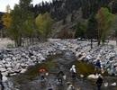 Cá chết hàng loạt ở Mỹ vì chất thải từ các công trình xây dựng