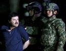 """Những tin nhắn khiến """"ông trùm"""" El Chapo sa lưới"""