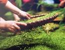 Ngày hội Mễ Trì mùa cốm xanh Hà Nội