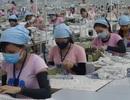 Phạt hàng chục doanh nghiệp vi phạm pháp luật lao động, bảo hiểm