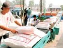 Gạo Việt: Tự phát, mạnh ai người nấy lo, mù tịt về thị trường!