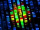 Tiết lộ vai trò của các gen mới đối với chức năng tim