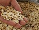 Cách lựa chọn hạt dưa, hạt bí an toàn cho ngày Tết