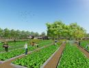 """Chiêu độc """"hút"""" giới trẻ: Mua nhà phố được tặng vườn rau sạch"""