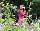 Ngắm hoa tam giác mạch Hà Giang về khoe sắc giữa thủ đô Hà Nội