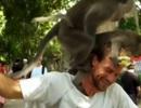 """Đôi khỉ vô duyên làm """"chuyện ấy"""" ngay trên đầu du khách"""