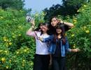 Cung đường hoa dã quỳ đẹp nhất Hà Nội
